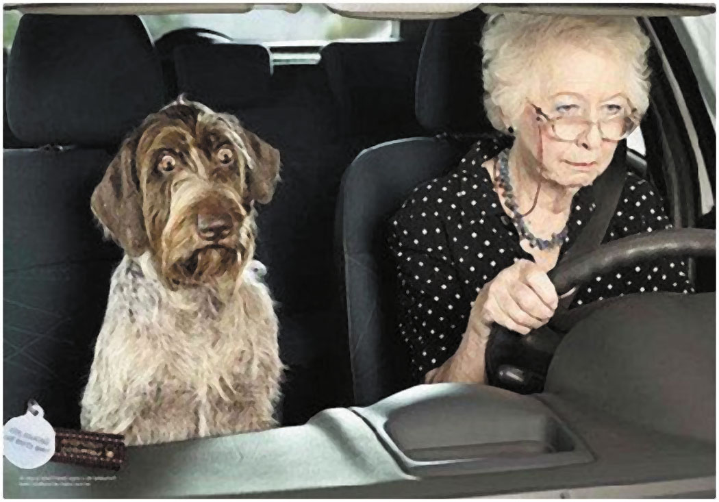 In the photo above, this lady may think she is still able to drive well but her dog isn't so sure.